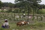 Suasana kawasan Urban Forest di bantaran Sungai Bengawan Solo, Jebres, Solo, Senin (15/7). Lantaran sepi, ruang terbuka hijau (RTH) tersebut justru digunakan untuk menggembala kambing.