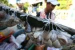 Foto ilustrasi bawang putih (JIBI/Harian Jogja/Desi Suryanto)