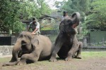 Ilustrasi gajah di Gembiraloka Zoo (JIBI/Harian Jogja/Dok.)