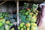 Pepaya Diburu Pemudik, Omzet Penjual Tembus Jutaan Rupiah
