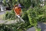 PENATAAN TAMAN KOTA SOLO : DPRD Minta BLH Tak Ditinggal Dalam Kaji Penebangan Pohon