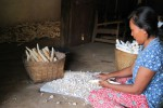 Warga Pracimantoro tengah mengupas singkong untuk membuat tiwul (Tika Sekar Arum/JIBI/Solopos)