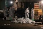 Ilustrasi penanganan flu burung. (Dok/JIBI)
