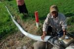 Pengelolaan Tidak Maksimal Bikin 60% Air Terbuang Sia-sia