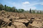 Warga melintas di permukaan Telaga Timbang di Desa Pracimantoro, Kecamatan Pracimantoro,  Wonogiri pekan lalu. Telaga seluas lebih dari 1 hektare dan kedalaman 2 meter itu kini kering, hanya sebagian kecil saja air yang tersisa. (Tika Sekar Arum/JIBI/Solopos)