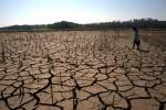 KEKERINGAN BOYOLALI : 10.000 Ha Lahan Pertanian Bera