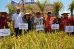 PANEN RAYA PADI : Pemkab Sukoharjo Perkenalkan Pupuk Organik dari Limbah Ciu