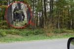 Penebang Kayu Rekam Bigfoot di Hutan Pennsylvania