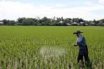 Ilustrasi petani menebar pupuk (JIBI/Solopos/Dok)