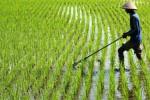 Petani menggarap lahan tanaman padi di Desa Kateguhan, Kecamatan Sawit, Jumat (1/11). (Oriza Vilosa/JIBI/Solopos)