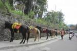 Deretan kuda menyambut wisatawan di kompleks objek wisata di Grojogan Sewu di Tawangmangu, Karanganyar, Selasa (5/11/2013). (Ponco Suseno/JIBI/Solopos)