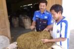 KOMODITAS PERTANIAN : Produksi Tembakau Tahun Ini Diprediksi Naik 80%