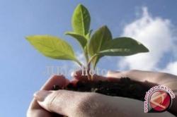 Bibit tanaman (JIBI/Harian Jogja/Antara)