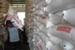 PERTANIAN NGAWI : Ngawi Langka Urea, Petani Tuding DPRD Tak Peduli
