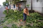 BENCANA GUNUNGKIDUL : Pohon Rawan Tumbang Mulai Dipangkas
