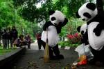 FOTO WWF-INDONESIA : Bumi Panda