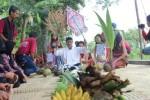 PERTANIAN KLATEN : Ritual Panen di Karangdowo, Syukuri dengan Produk Organik