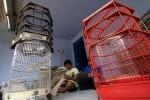 Pekerja industri kerajinan membuatan sangkar burung di Anugrah Sangkar, Mojosongo, Solo, Senin (27/1/2014). Kerajinan sangkar burung tersebut dipasarkan hingga Jakarta, bahkan Sumatra dengan Rp650.000 hingga Rp2 juta tergantung bentuk dan ukuran. (Burhan Aris Nugraha/JIBI/Solopos)