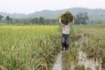 Bulog Surakarta Naikkan Harga Beli Gabah