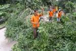 Ilustrasi pohon tumbang (Dok/JIBI/Solopos)