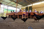 Foto ilustrasi.  (JIBI/Bisnis Indonesia/Paulus Tandi Bone)