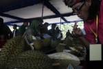 FESTIVAL DURIAN KARANGANYAR : Kenalkan Manisnya Durian Matesih