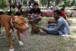 FOTO SOLO PIBULL COMUNITY : Pemilik Pitbull Kumpul di Monumen Banjarsari