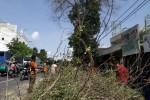 Pohon di Kota Madiun Dipangkas, 3 Meter dari Tanah Bebas Ranting & Daun