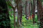 Aneka pemandangan Taman Hutan Rakyat (Tahura) K.G.P.A.A. Mangkunergoro I yang terletak di Dusun Sukuh, Desa Berjo, Kecamatan Ngargoyoso, Karanganyar . Foto diambil belum lama ini. (Ponco Suseno/JIBI/Solopos)