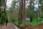 PELESTARIAN HUTAN : Wagub: Luas Hutan Negara di Jateng Masih Kurang