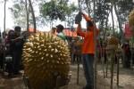 Durian Kencono Rukmi, durian asli Gunungkidul. (Ujang Hasanudin/JIBI/Harian Jogja)