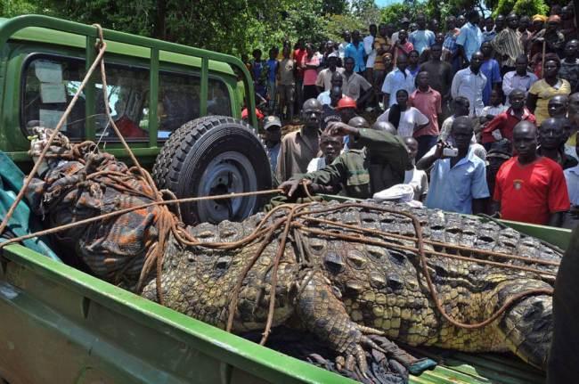 Buaya rakasasa di Uganda yang menewaskan 4 orang (metro.co.uk)