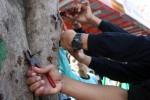 IZIN REKLAME : Wow, 5 Kg Paku Menancap di Pohon di Kawasan Wates