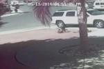 KISAH  UNIK : Disergap Anjing, Bocah Diselamatkan Kucing