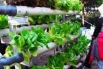 Pengunjung Bandung Agri Market (BAM) memerhatikan tanaman sayur yang ditanam secara hidroponik dalam acara yang digelar di di Bandung, Jawa Barat, Minggu (25/5/2014) itu. Pemerintah Kota Bandung mengadakan gerakan Kampung Berkebun di 151 rukun warga (RW) untuk memanfaatkan lahan kosong pada setiap rumah sehingga warga mampu memenuhi kebutuhan sayurannya sendiri. (JIBI/Solopos/Antara/Agus Bebeng)