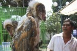 FOTO PAMERAN FLONA 2014 : Burung Hantu Dijual di Lapangan Banteng