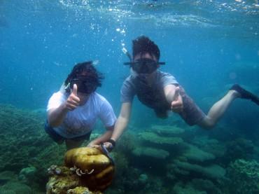 Underwater di Taman Laut perairan Kepualauan Karimunjawa, Jepara, Jawa Tengah (Holy Kartika N. S/JIBI/Harian Jogja)