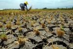 KEKERINGAN BOYOLALI : Meski Dekat Sumber Air, Petani di Teras Boyolali Kekeringan Tiap Tahun