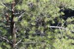 SERANGAN KERA : Merapi Normal, Ladang di Lima Desa Diserang Kera