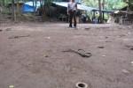 Seorang anggota Polres Klaten menunjukkan lokasi perjudian di Desa Pusung, Kecamatan Kemalang yang telah dibongkar Polres Klaten, Kamis (3/7). Lokasi tersebut kerap digunakan untuk judi sabung ayam. Foto diambil Jumat (4/7/2014). (Ayu Abriani/JIBI/Solopos)