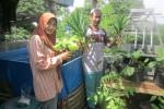 Pola penanaman akuaponik kebun sayuran di atas rumah di TBM Mata Aksara. Kebun ini sebagai bentuk aplikasi baca buku kemudian dipraktekkan. Foto diambil Rabu (20/8/2014). (JIBI/Harian Jogja/Sunartono)