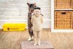 Patung cakaran kucing berwajah Kim Jong Un (dailymail.co.uk)