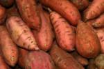 Ubi jalar yang bermanfaat bagi kesehatan (bonnieplants.com)