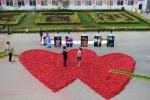 Dou Ziwang, seorang pegawai pabrik pengolahan cabai, melamar pacarnya saat mereka berdiri di gambar berbentuk hati yang terbuat dari 99.999 cabai, di Handan, Provinsi Hebei, Tiongkok, Jumat (29/8). (JIBI/Solopos/Reuters/Stringer)