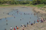 Para penangkap ikan menyerbu Waduk Tandon, Krisak, Kecamatan Selogiri saat waduk tersebut dikuras selama musim kemarau, Selasa (12/8/2014).(JIBI/Solopos/Bony Eko Wicaksono)
