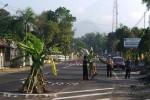 Pohon pisang berada di tengah Jalan Kaliurang Kilometer 20, Hargobinangun, Pakem, Sleman, Kamis (18/9). (JIBI/ Harian Jogja/Warga Desa Hargobinangun.Anggara Daniawan)