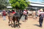 Aktivitas jual beli di pasar hewan Siyonoharjo, Kecamatan Playen, Gunungkidul. (JIBI/Harian Jogja/David Kurniawan)