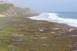 Mencari rumput laut (JIBI/Harian Jogja/Kusnul Isti Qomah)