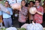 FOTO FESTIVAL LABU NUSANTARA : IPB dan Panah Merah Dorong Tanam Labu