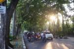 Awas, Ratusan Pohon Rapuh Ancam Jalur Utama Solo